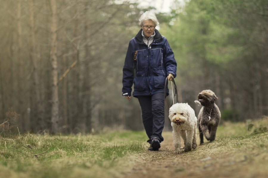 A retired woman takes a stroll with her dogs.