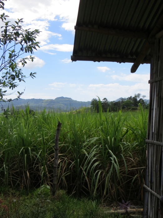 house and fields in the Philippines