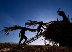 Workers in the Philippines stack hay